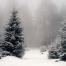 Junto al Arbol de Navidad Blog de Robert Selber
